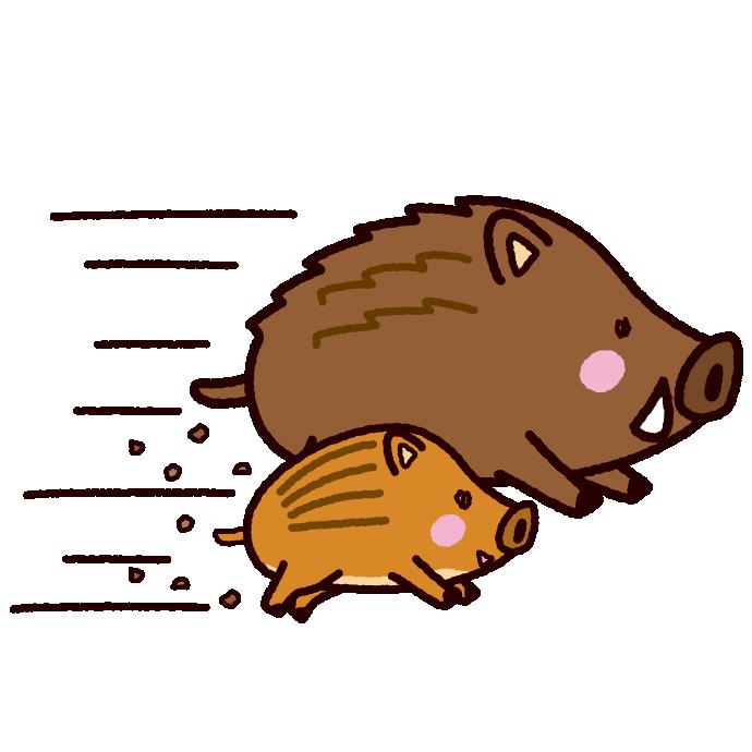 可愛い猪の親子